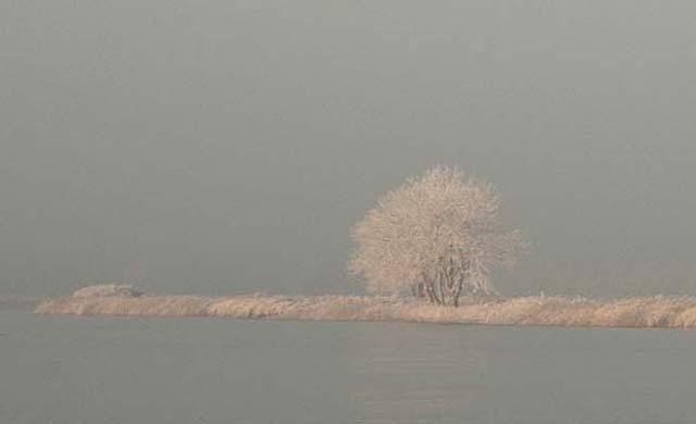 rijp op bomen winterweer